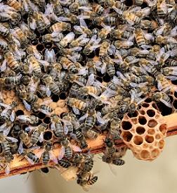 Bees at CRM